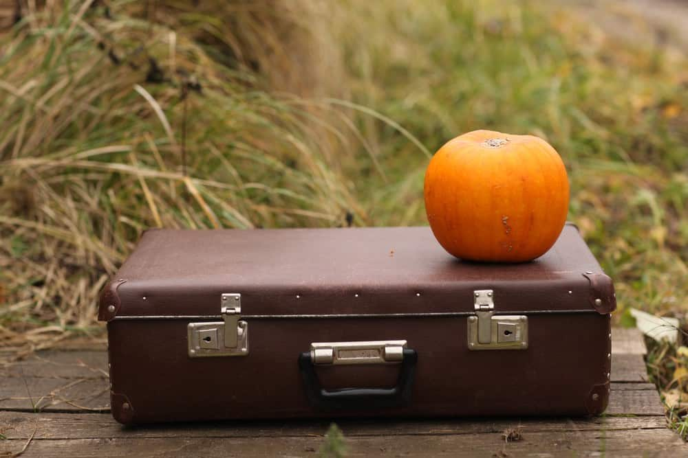 suitcase and pumpkin