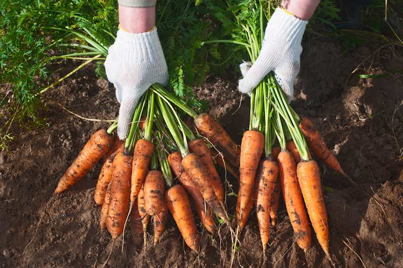 carrots inexpensive food