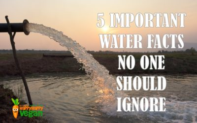 5 Important Water Facts No One Should Ignore