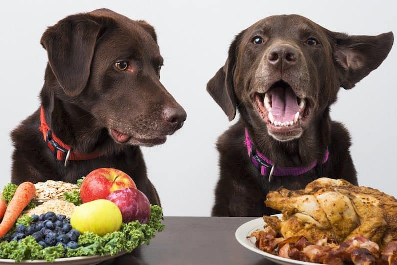 two dogs with food - vegan nutrition misconception