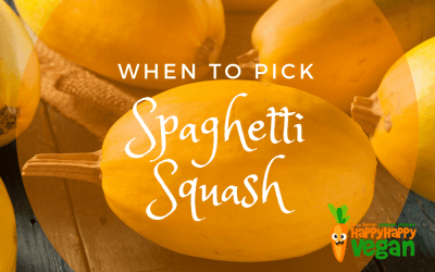 When To Pick Spaghetti Squash (And, How To Ripen And Store Your Gourd!)