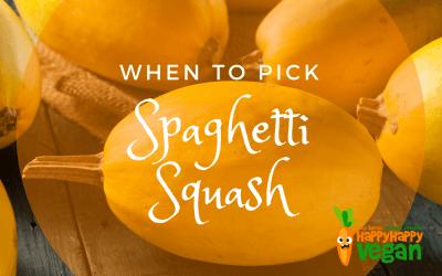 When To Pick Spaghetti Squash And More