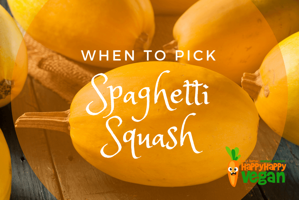 When To Pick Spaghetti Squash And More