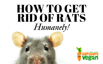 how to get rid of rats naturally