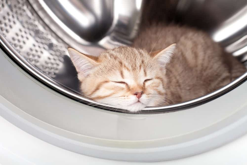 Kitten asleep in a clean washing machine front loader drum