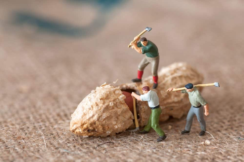tiny model figures breaking into a peanut with axes on a hessian cloth