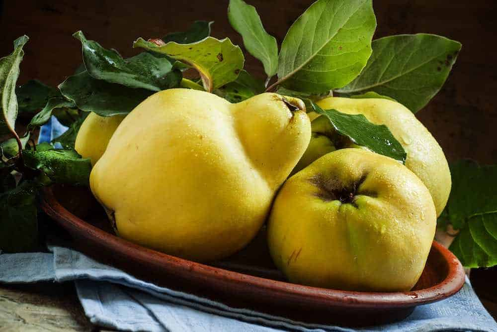 several ripe quince in a bowl with leaves intact