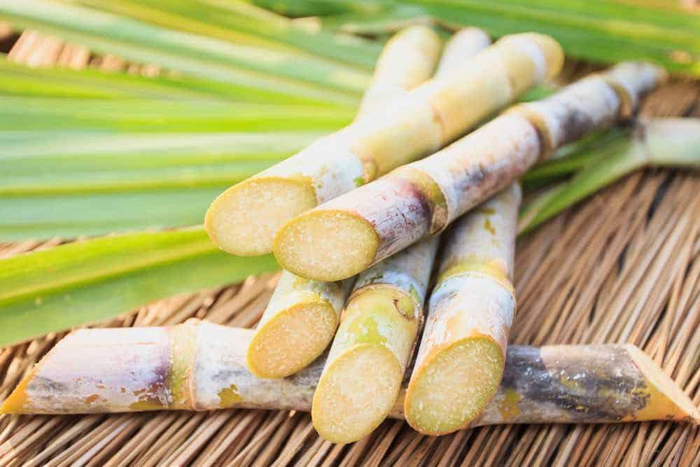 cut sugar cane on bamboo matting
