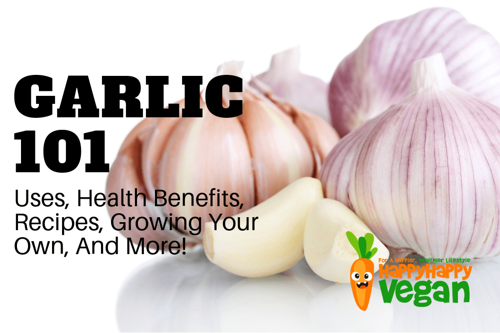Garlic 101: Uses, Health Benefits, Recipes, Growing Your Own, And More!