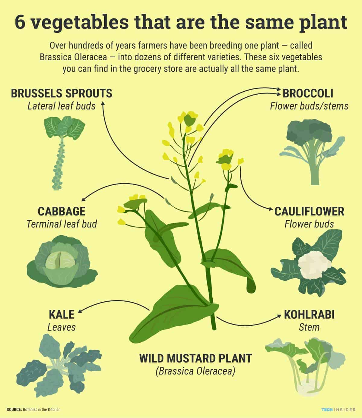brassica oleracea derived vegetables