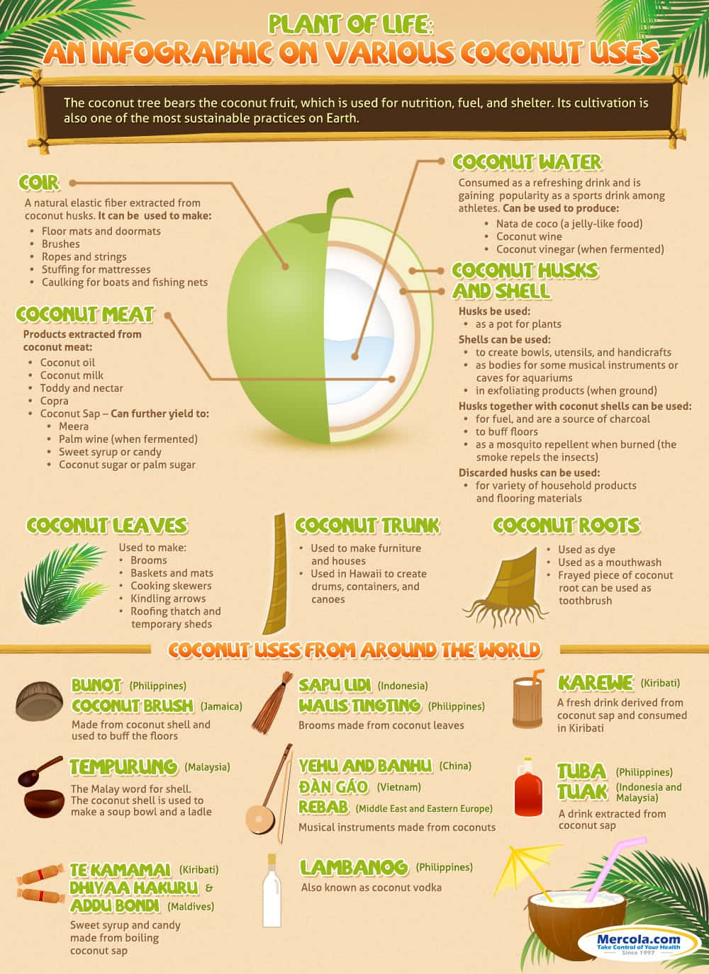 coconut uses infographic