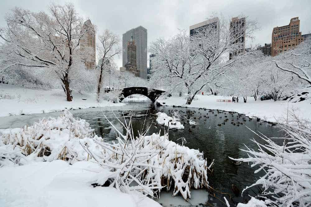 New York in winter, perfect terrain to test out your non-leather boots