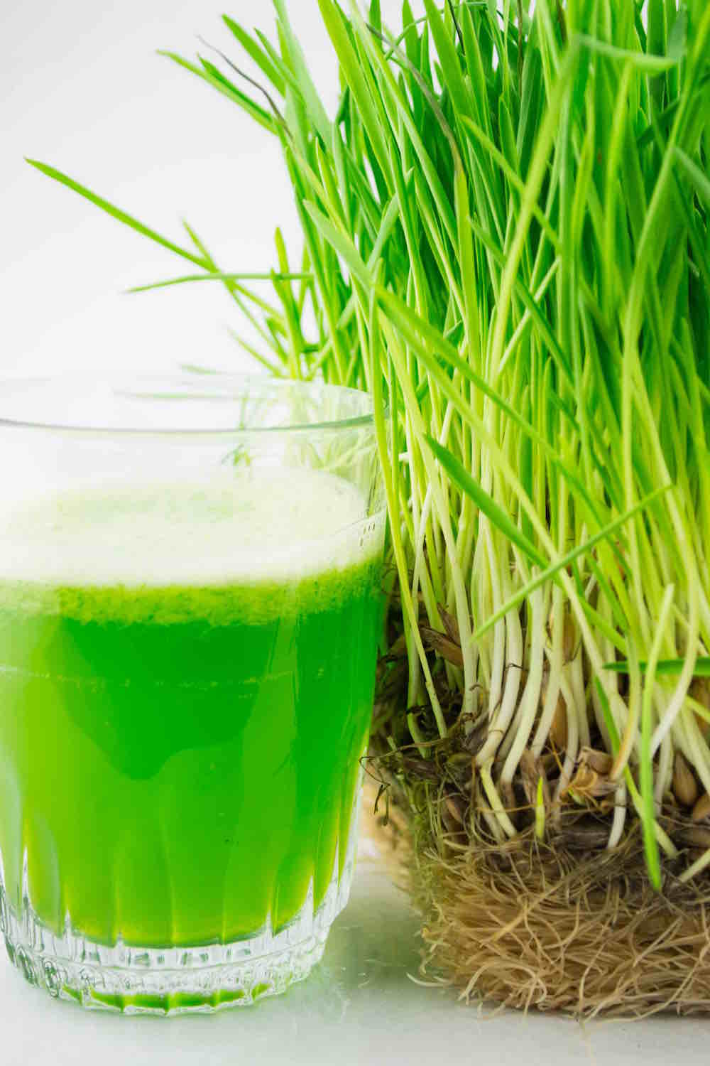 fresh wheatgrass juice and plant