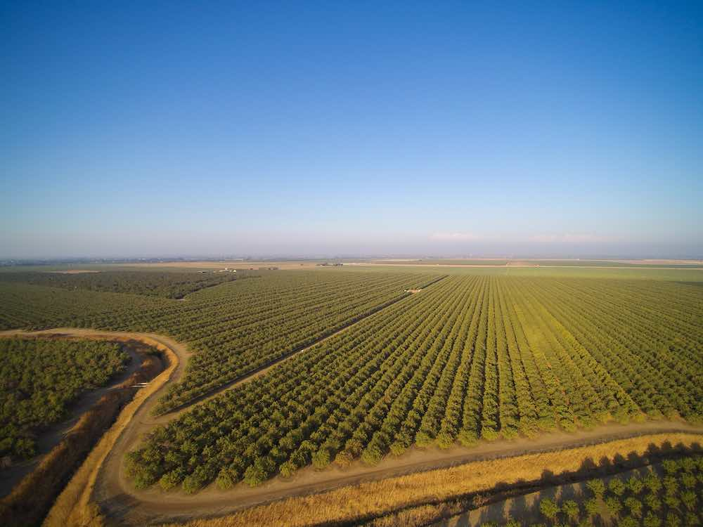 aerial shot of an almond grove monoculture