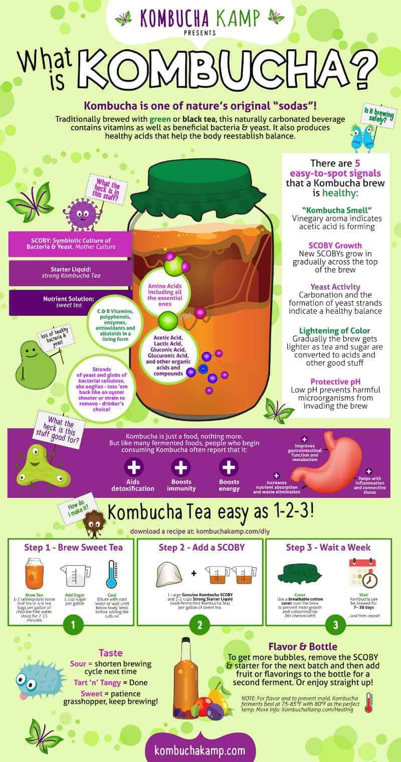 kombucha: what is it? infographic