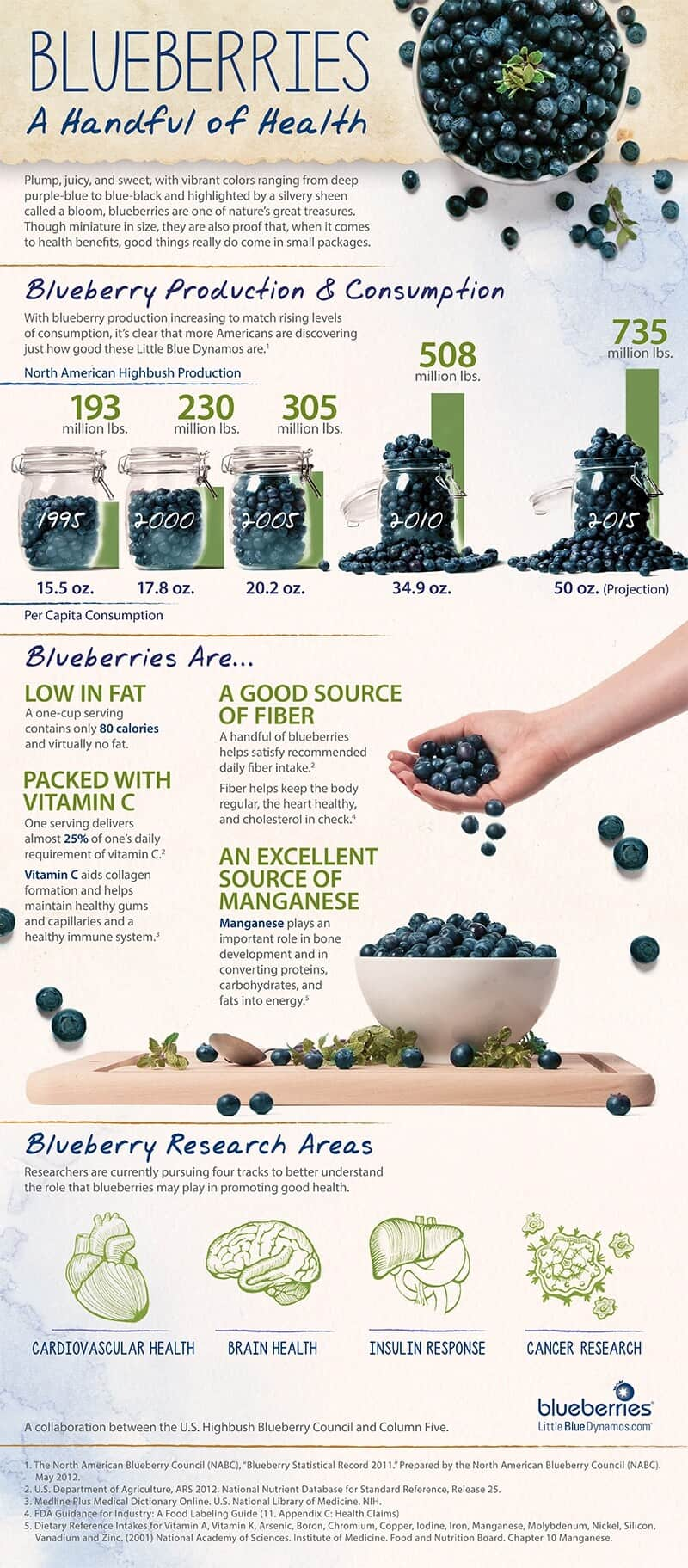 blueberry guide infographic