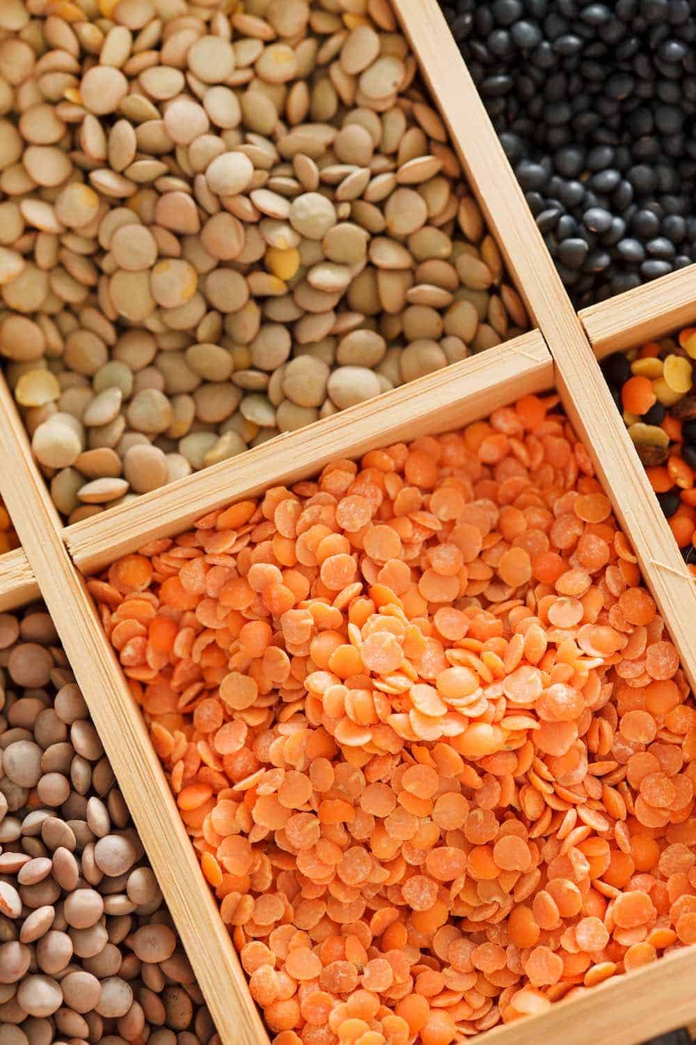 different types of lentil