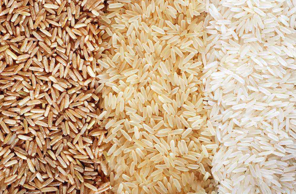 rice protein source